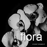 200q flora-