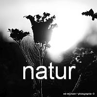 200q natur