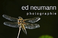 200x133 _ ed neumann _ photographie _--