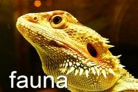200x133_photogal-fauna