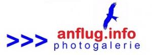 anfluginfo-photogalerie-333