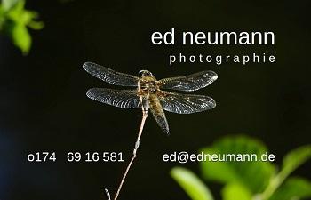 _ ed neumann _ photographie _