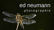 _ ed neumann - photographie _ 184x103
