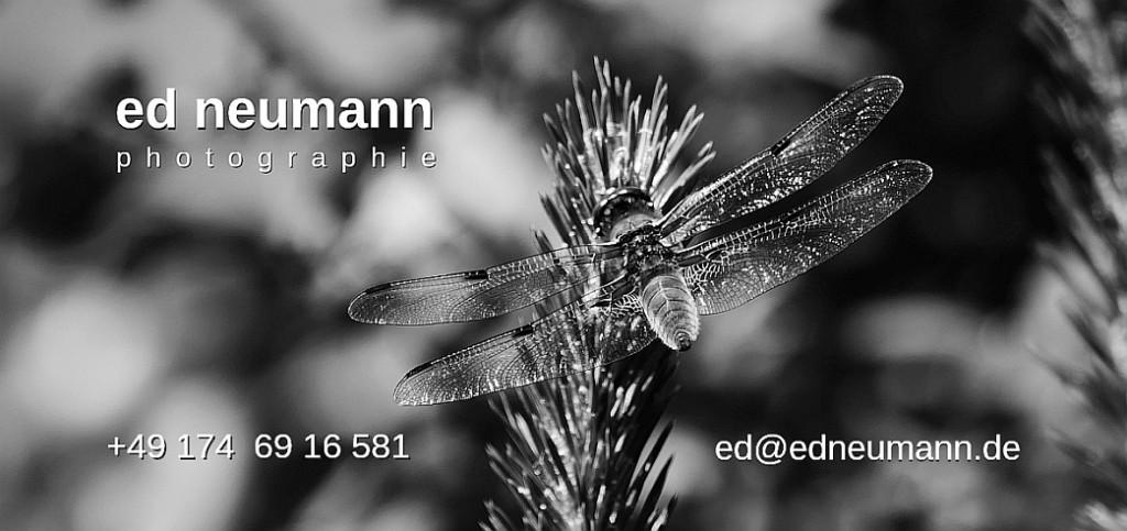 ed neumann * photographie