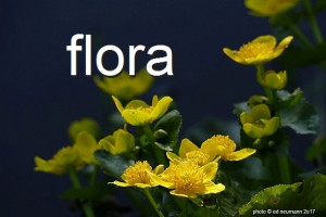 photogal-flora