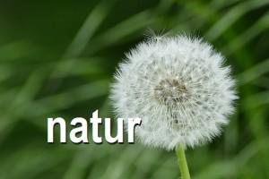 photogal-natur