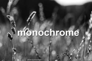 photogalerie-monochrome-